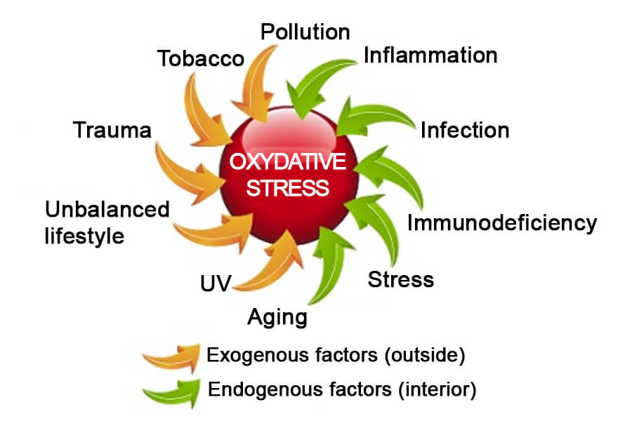 C60-France Antioxidant oxidative stress