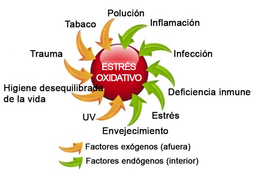 C60-France Antioxidante estrés oxidativo