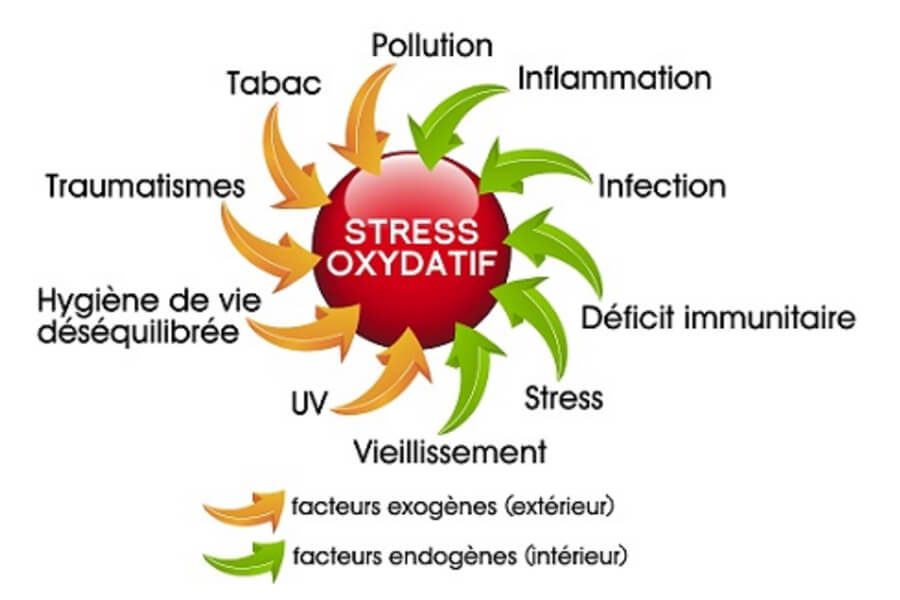 C60-France-Antioxydant-stress-oxydatif