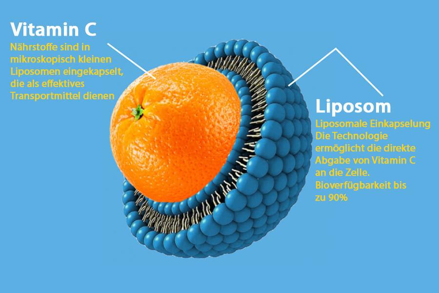 C60-France-Antioxydant-vitamin C liposomales